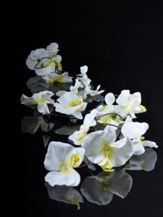 Dekoracja ślubna - Sznur Lampek - Białe Kwiaty Orchidei
