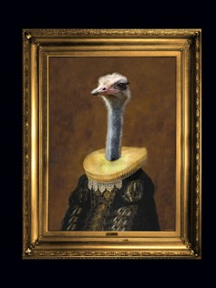 Angela Rossi - Ostrich - Obraz na płótnie