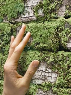 Białe cegły porośnięte mchem - Tapeta 10m