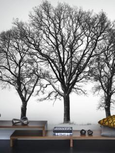 Mr Perswall - Creativity & Photo Art - Sitting In A Tree