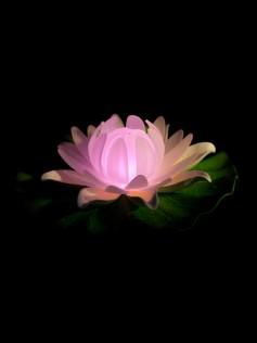 Lilia pływająca LED